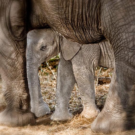 WEB_P_ID560390 Mommas Baby (Virginia Aschmoneit).jpg