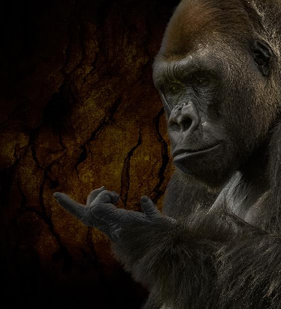 Gorilla 1 © 2018 Steven Greenbaum | All Rights Reserved