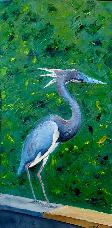 Tricolor Heron © 2018 Alexangel Estevez   All Rights Reserved