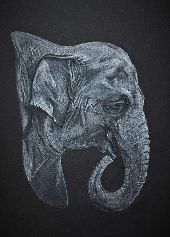 Ghost in The Shadow: Elephant © 2018 Gavin Minard | All Rights Reserved