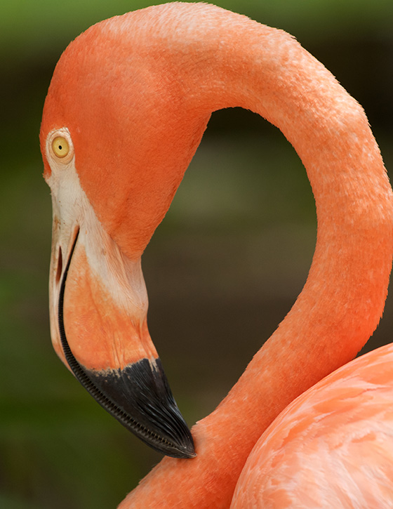Flamingo © 2018 Kirsten Hines | All Rights Reserved