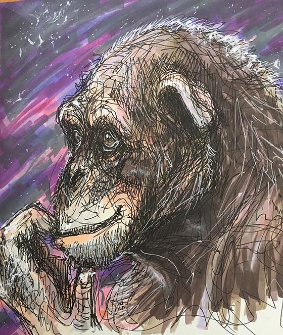 Chimpanzee © 2018 Sophia Logan-Barre | All Rights Reserved