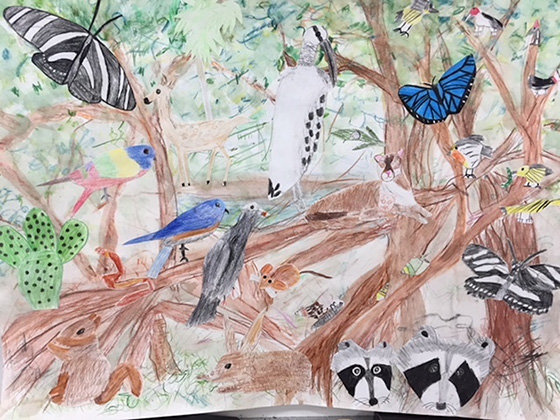 Endangered Species of the Hardwood Hammock © 2018 Southside Elementary Museums Magnet School | All Rights Reserved