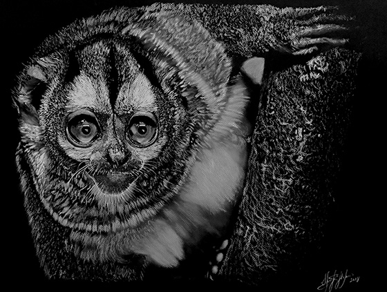 Owl Monkey 1 © 2018 Sherif Hakeem | All Rights Reserved