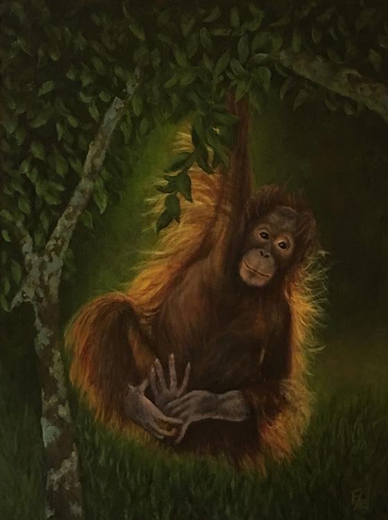 Baby Orangutan © 2018 Elizabeth Elgin | All Rights Reserved