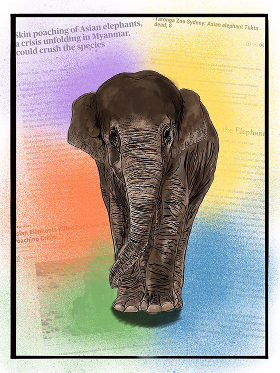 The Relevancy of the South Asian Elephant in Society © 2018 Jessica Lober | All Rights Reserved