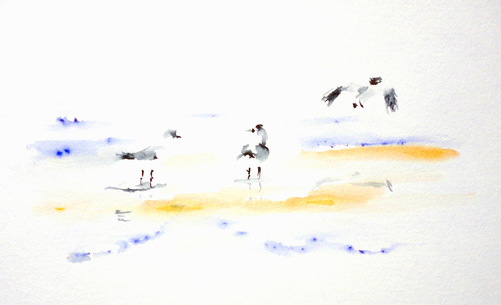 Beach Gulls © 2018 Judith Bradford | All Rights Reserved