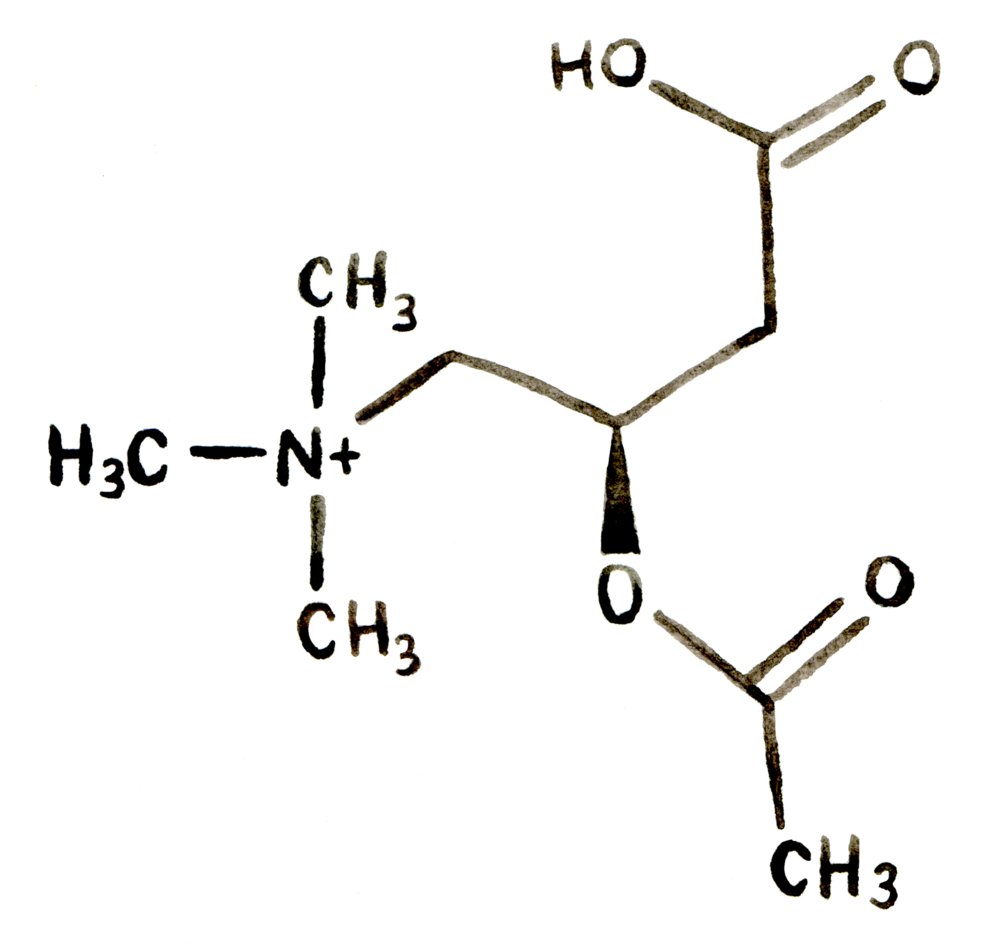 Nacetyl Lcarnitine Structure as Best Nootropics from Earthly Biotics