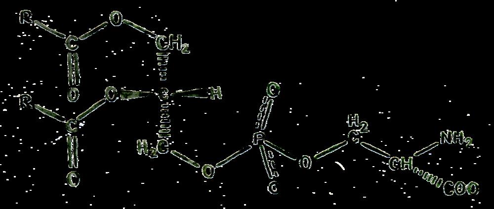 Phosphatidylserine Structure in Buy Nootropics UK from Earthly Biotics