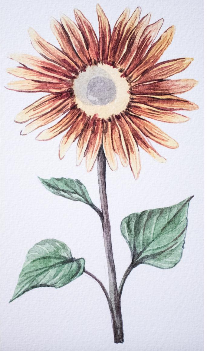 Phosphatidylserine Sunflower Lecithin Nootropics UK earth grown ingredients in Global Focus