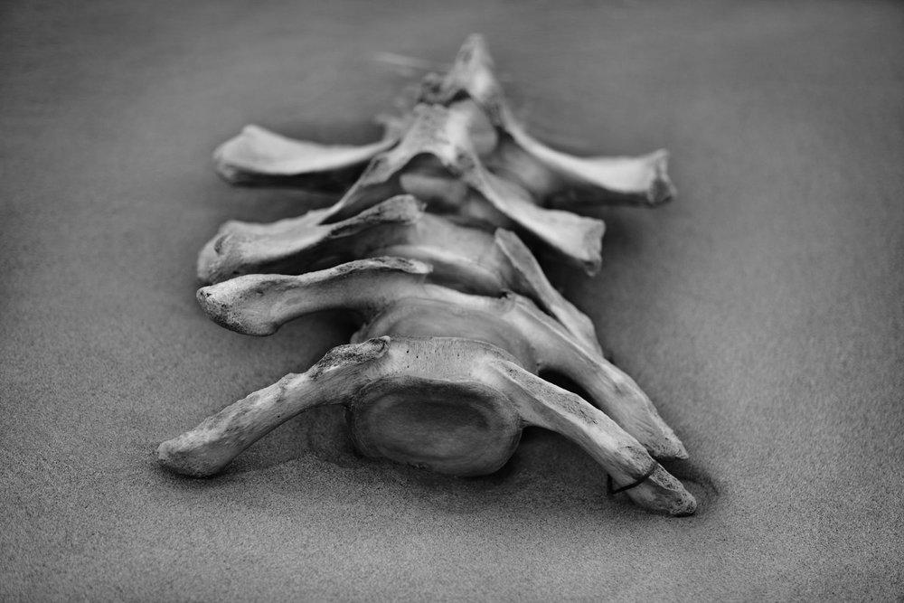 bone_1 copy.jpg