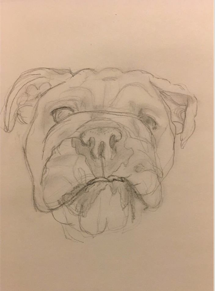 Lily the Bulldog