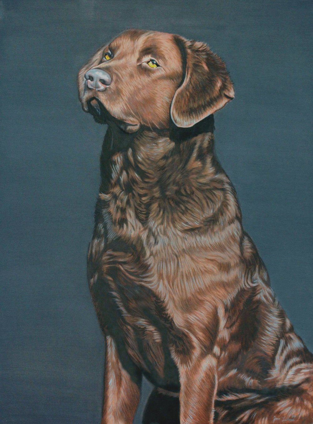 Chesapeake Bay Retriever I