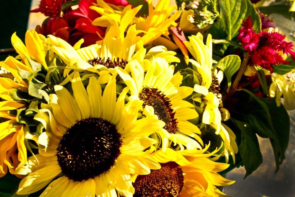 flowers woodleigh.jpeg