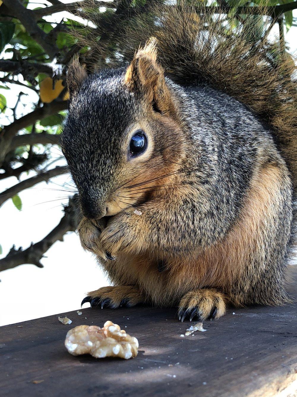 Squirrel!.jpg