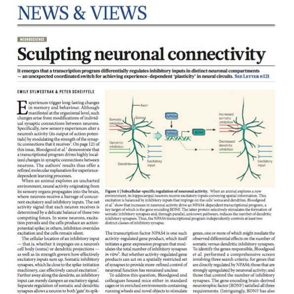 - Sylwestrak EL, Scheiffele P (2013) Sculpting neuronal connectivity. Nature 503:42-43.