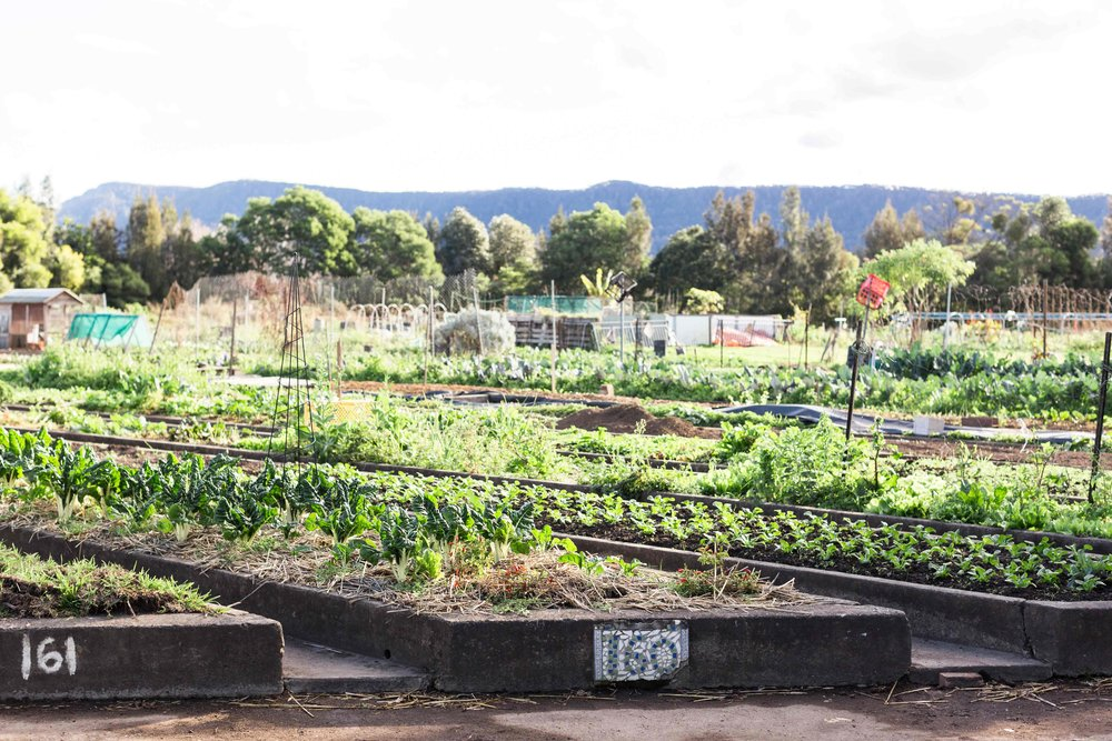 Dapto-Community-Farm.jpg