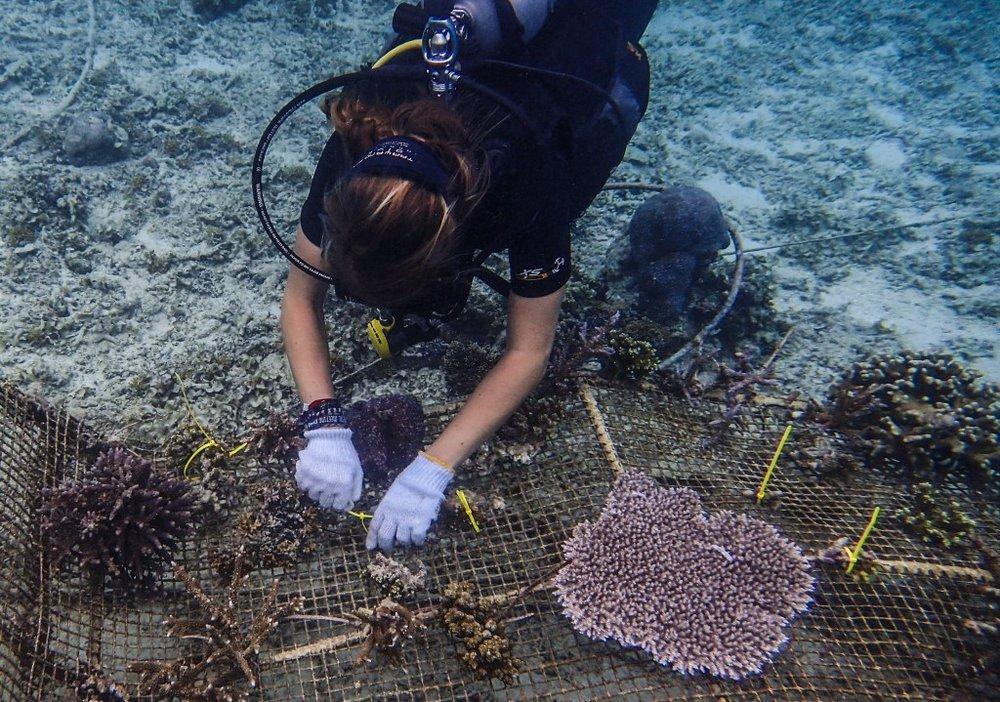 gt-bio-17.jpg coral gardening