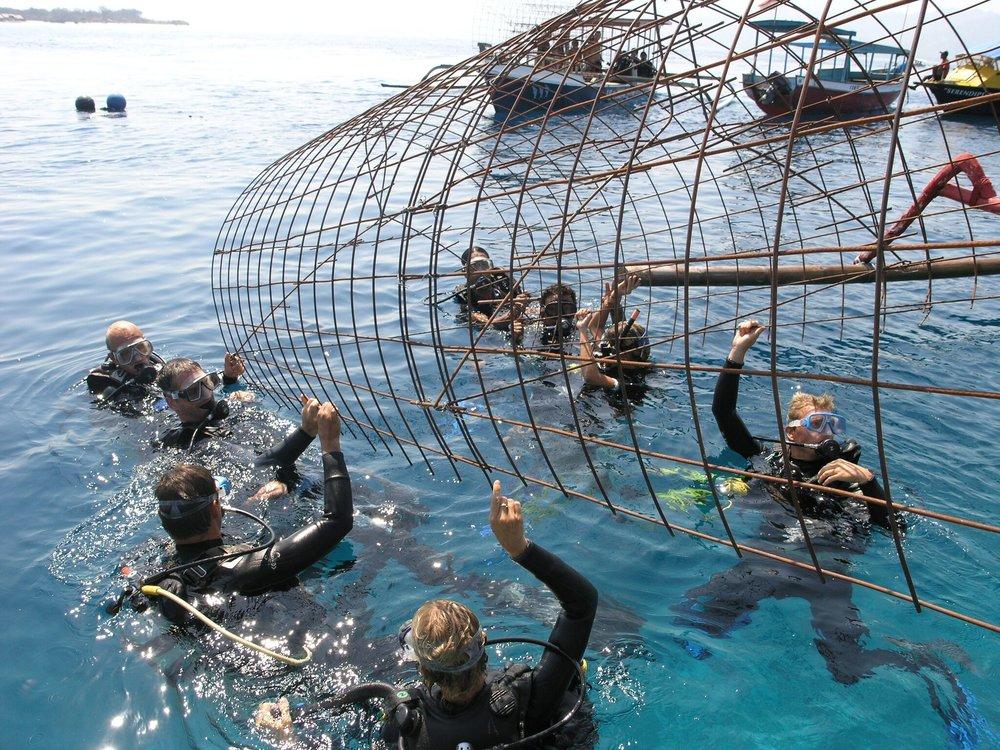 Building coral reef