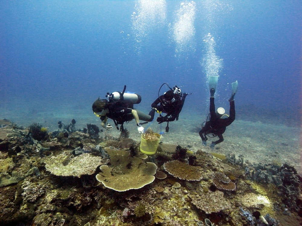 Cleaning coral reef