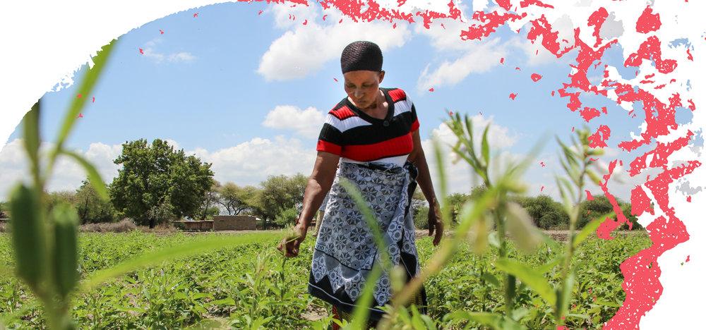 Farm-Africa-Petronila-among-plants-in-a-field.jpg