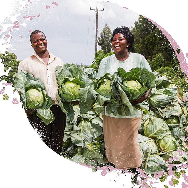 Love food? Love farming!  The majority of food is grown on small-scale family farms, many of whose potential is thwarted by poverty, environmental degradation, climate change and lack of access to markets. It's time to back sustainable farming. . . . . . . . . . . . . #WorldFoodDay #ChefsForChange #Africa #agriculture #cabbages #horticulture #globaldev #ZeroHunger #SDG2 #food #farming #familyfarms #sustainability