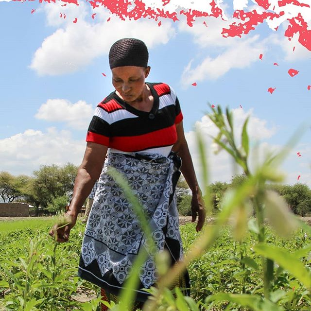 The world's best chefs and the planet's most remote rural communities both rely on one vital ingredient: #agriculture. Chefs for Change are united by hunger for making agriculture work better for small-scale food producers all over the world.  #ChefsForChange #sesame #Tanzania #farming #farmlife #food #femalefarmer