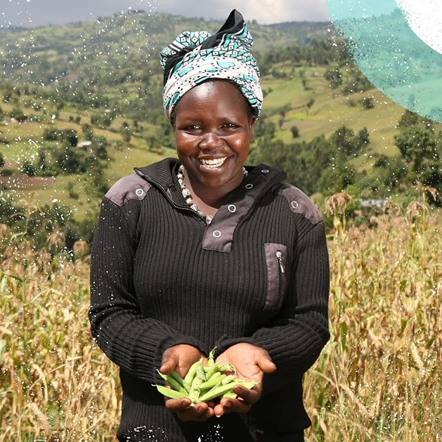 Family farms supply 80% of the #food produced in sub-Saharan Africa, Asia and Latin America. Sustainable food production starts with supporting small-scale farmers.  #ChefsForChange #Agriculture #Sustainability #FamilyFarms #FemaleFarmer #Farmer #Peas #Kenya #EastAfrica #FarmLife #Kitale