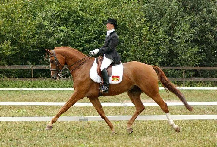 Claudia Horse.jpeg