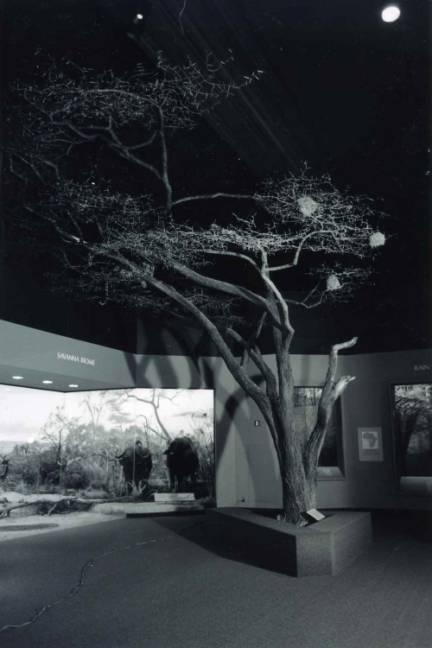 Acacia Tree Armature