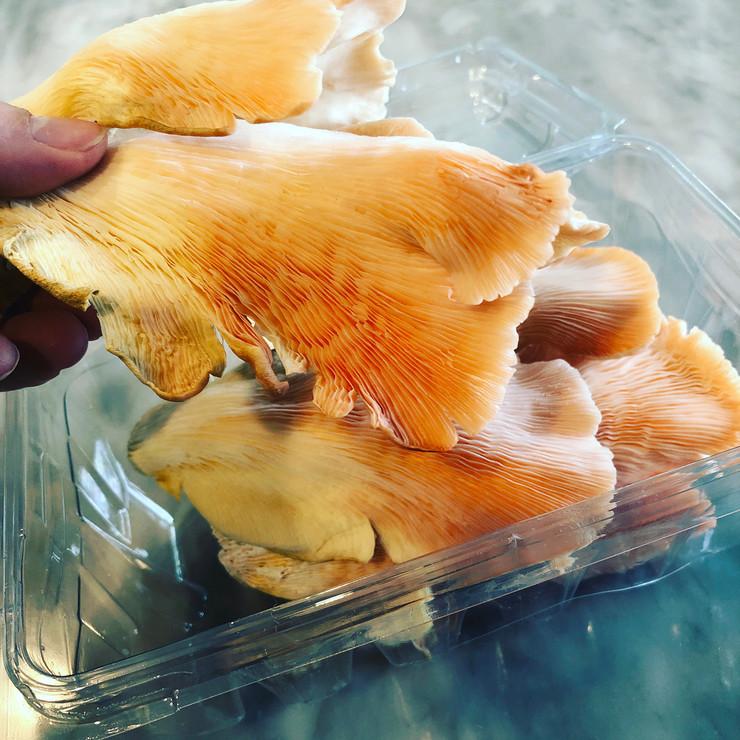 Mushroom from Dragonfly Farms