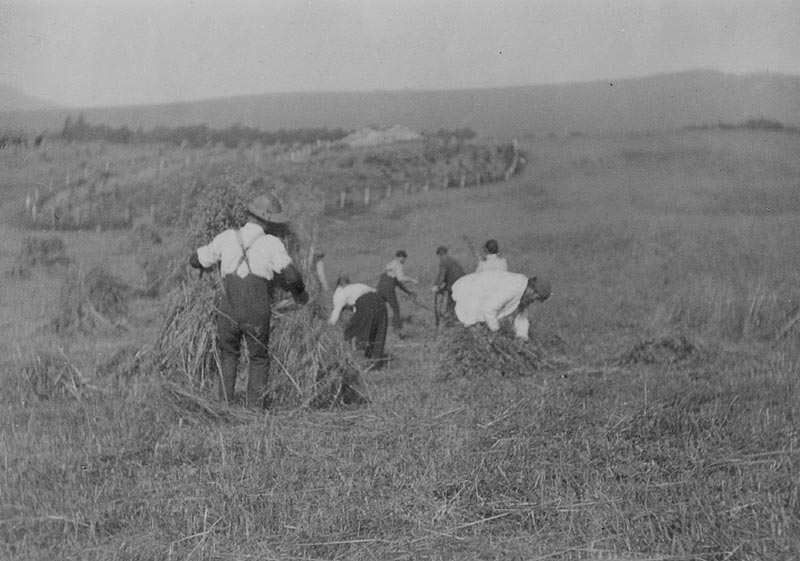 making stooks at dunmaglass