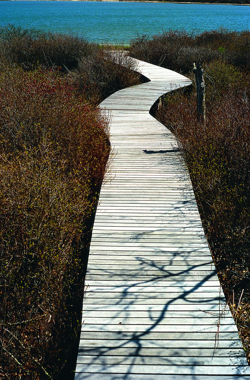 Douglas Fir  Boardwalk Edgartown, MA
