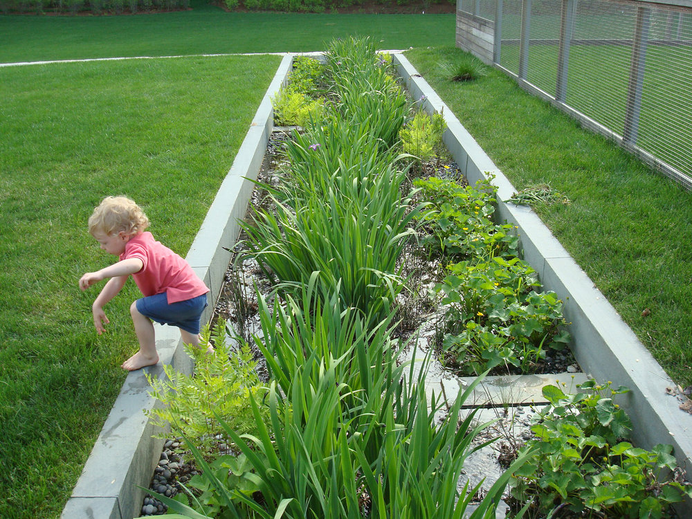 Rain Garden  Westwood, MA