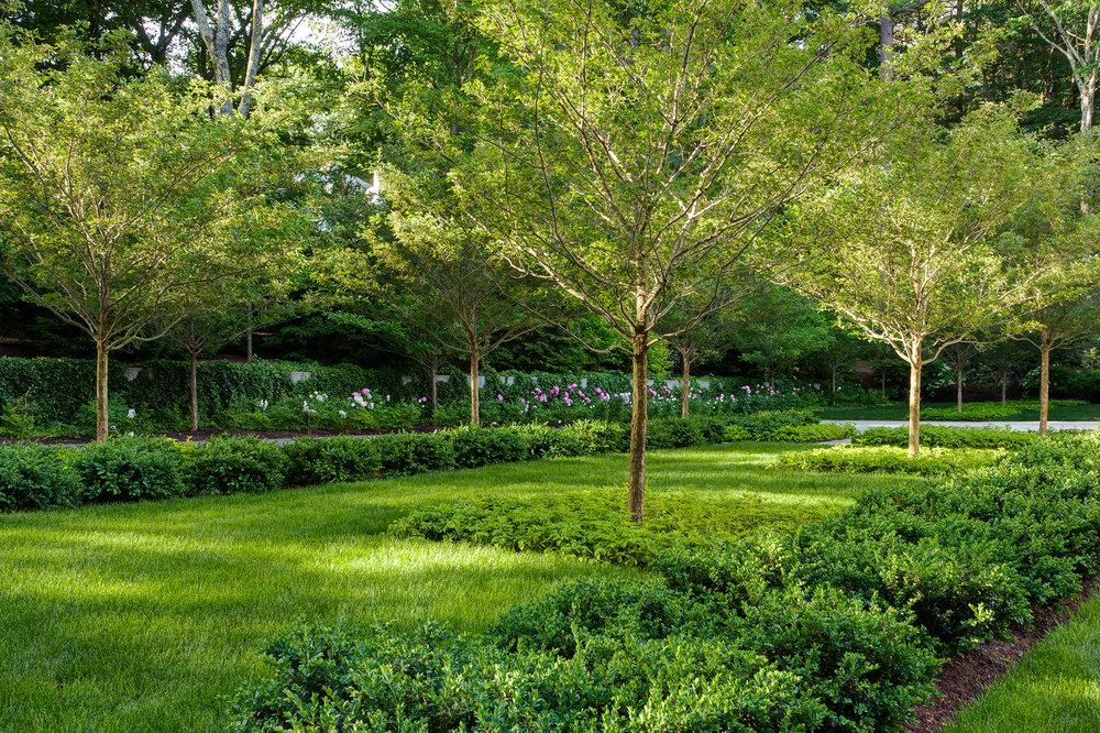 Row of Hawthorn  Weston Garden Weston, MA