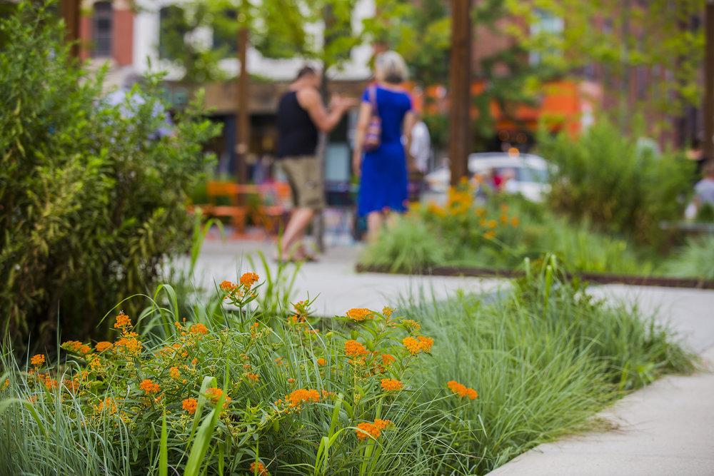 Pulaski Park Plants 1.jpg