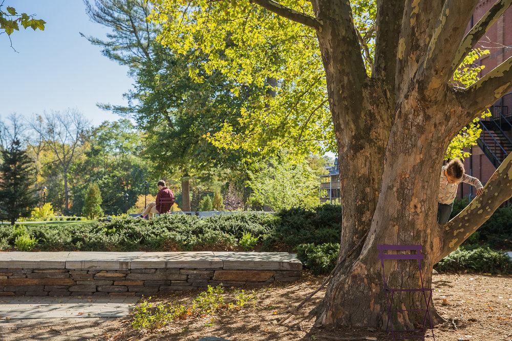 Pulaski Park Plants 6.jpg