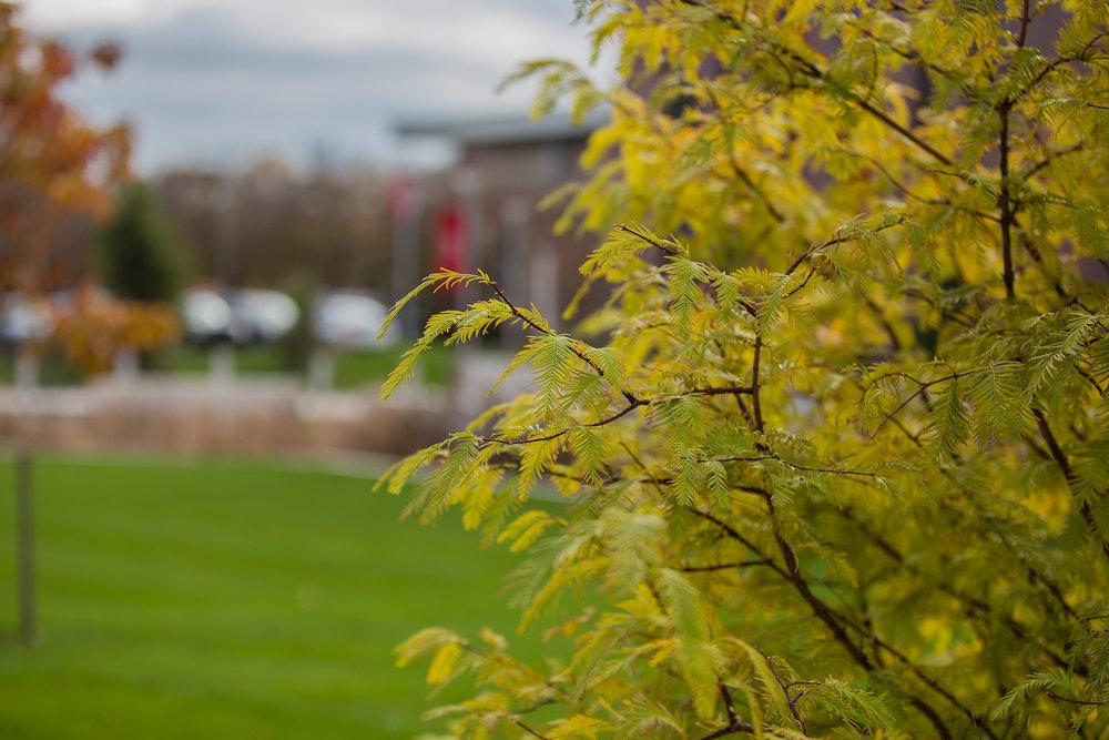 Darn Redwood  Sacred Heart University Fairfield, CT