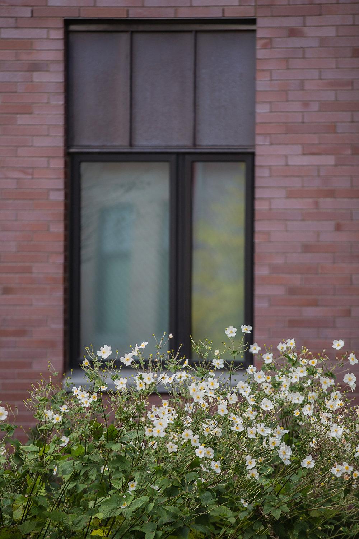 Anemone  Sacred Heart University Fairfield, CT