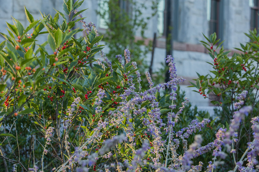 UMA Chapel Plants 1.jpg