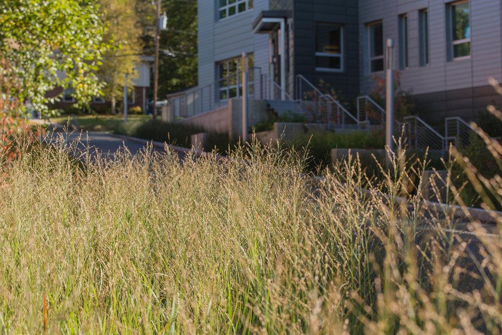 UMA Crotty Hall Plants 3.jpg