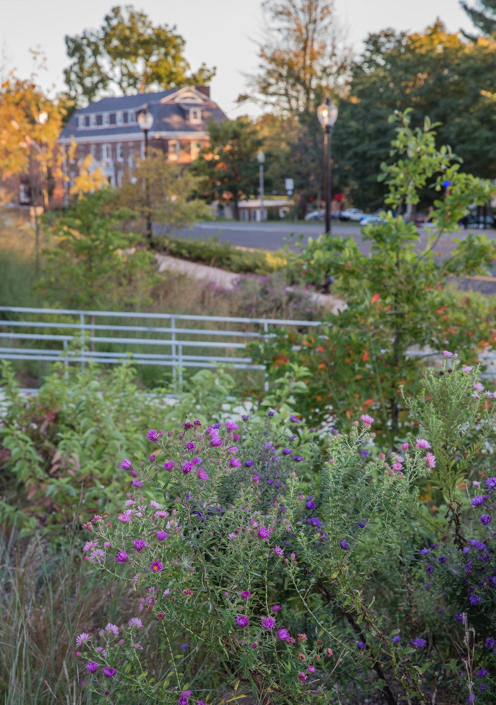 UMA DB Plants 6.jpg