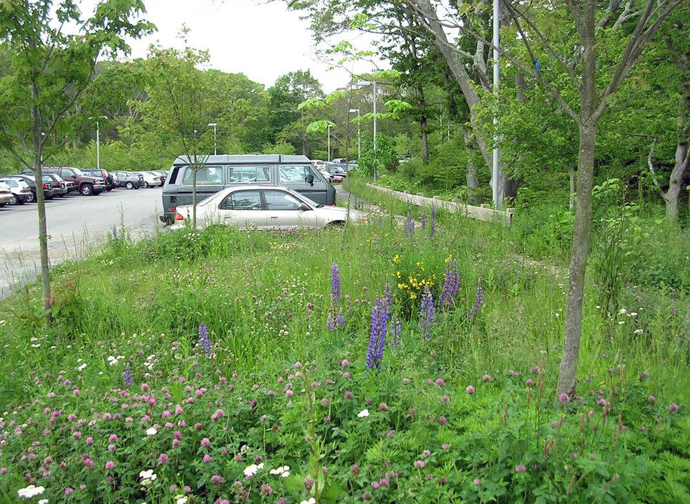 WHOI 16 parking bioswales CP.jpg