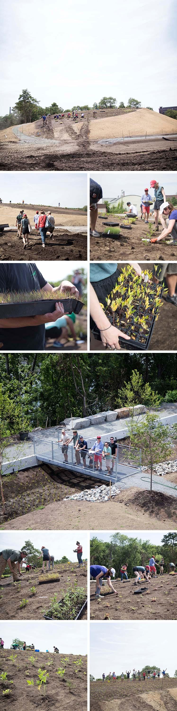 Ferrous Park Planting.jpg