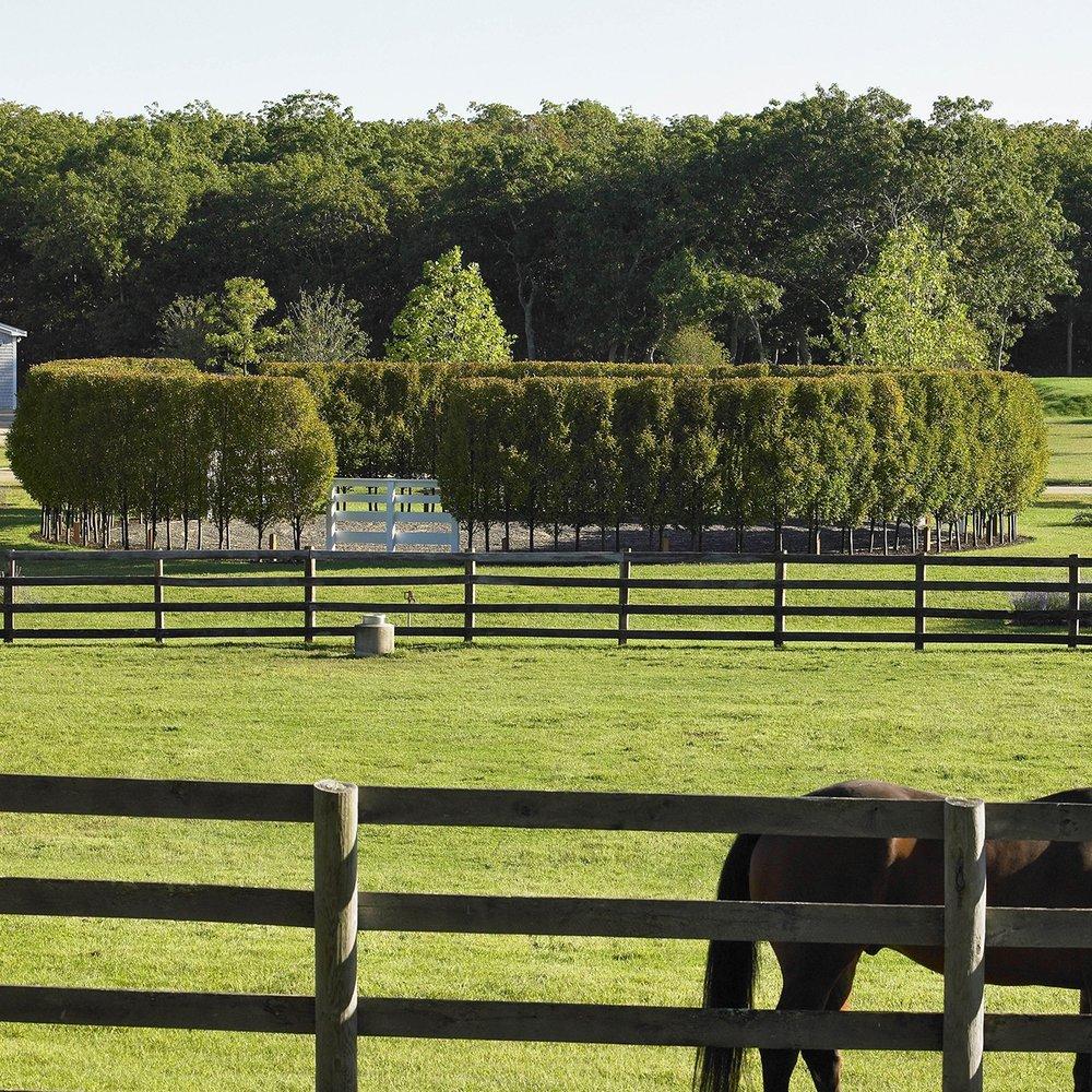 Circular Hedge  Willow Farm