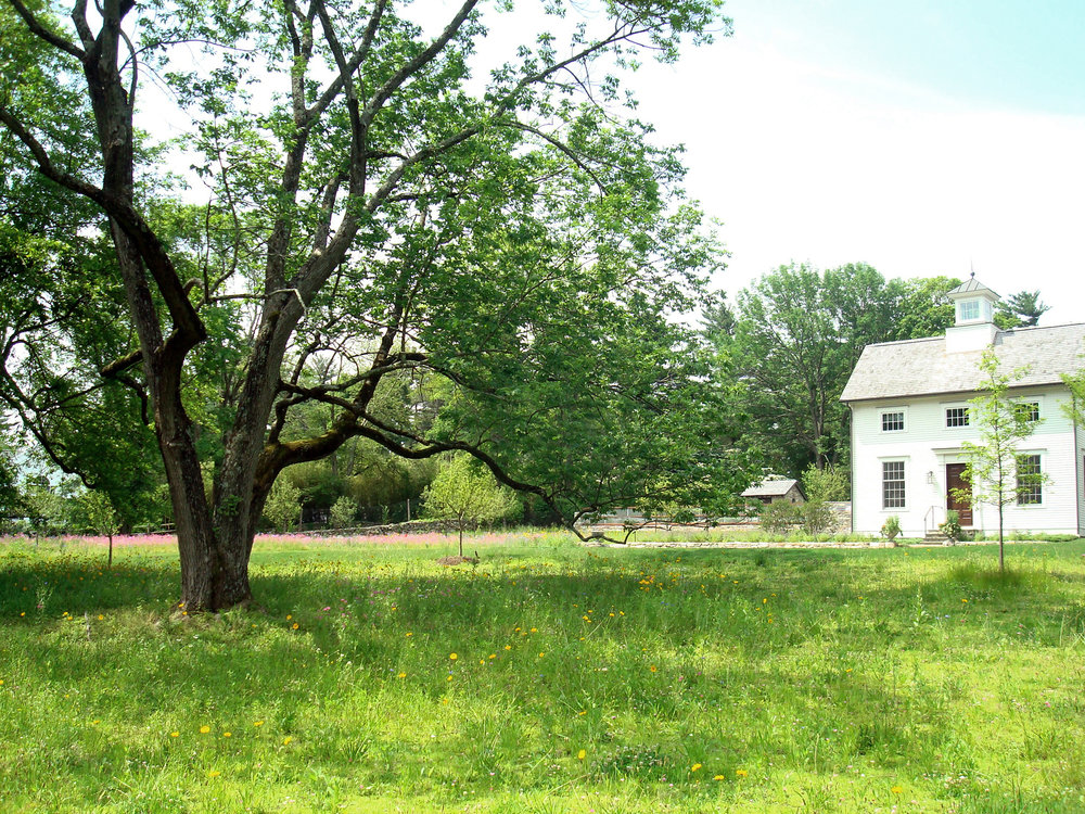 Amadeo-Meadow Farm_3.jpg