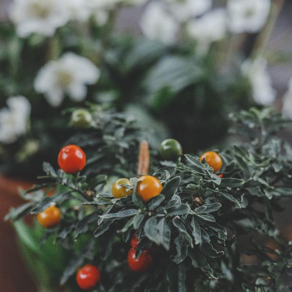 shady-acres-herb-farm-theresa-mieseler-grow-your-own-veggies.jpg
