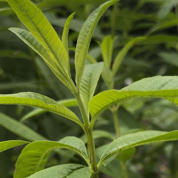 Plant List, Sources & Links -
