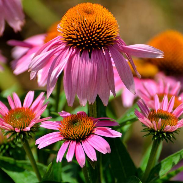 Herb Garden Consultations -