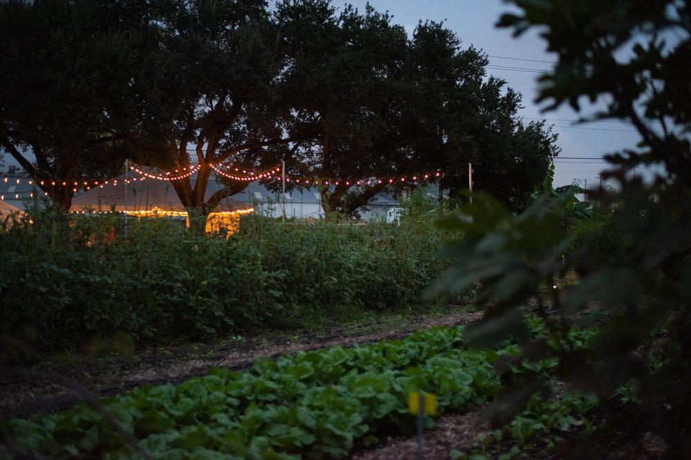 20181019_Foraging_Dinner_Finca_Tres_Robles_Amy Scott, ©  A.E.Scott Designs 2018-8.jpg